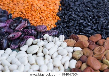 Orange Lentils, White, Purple, Brown Haricot Beans Close-up