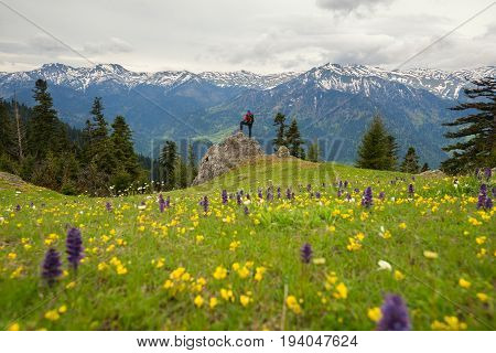 Man Traveler Stands On The Alpine Meadow Among The Wildflowers