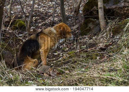 A Stray Dog In The Forest