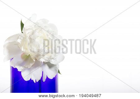 White peony in a blue vase on a white background. Isolated object census section on the right.