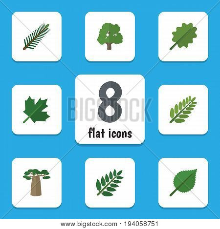 Flat Icon Ecology Set Of Spruce Leaves, Acacia Leaf, Alder And Other Vector Objects. Also Includes Baobab, Alder, Park Elements.