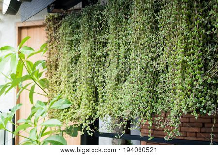 Green leaves plants of vertical garden stock photo