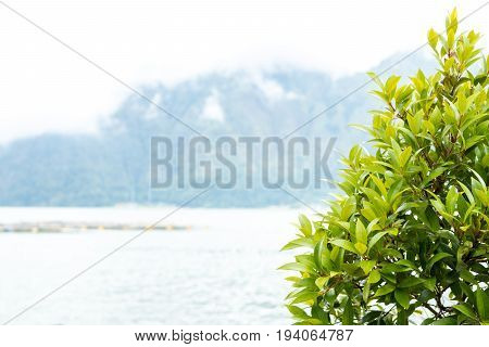 Exotic tropical background pattern, Bali island, tropics