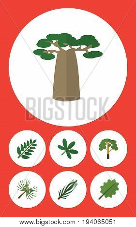 Flat Icon Natural Set Of Alder, Wood, Acacia Leaf And Other Vector Objects. Also Includes Oak, Maple, Alder Elements.