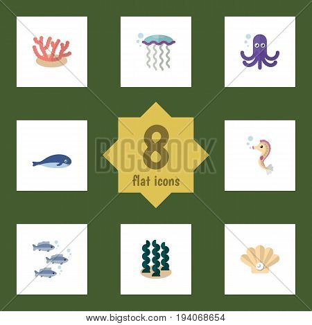 Flat Icon Sea Set Of Alga, Tuna, Conch And Other Vector Objects. Also Includes Hippocampus, Squid, Whale Elements.
