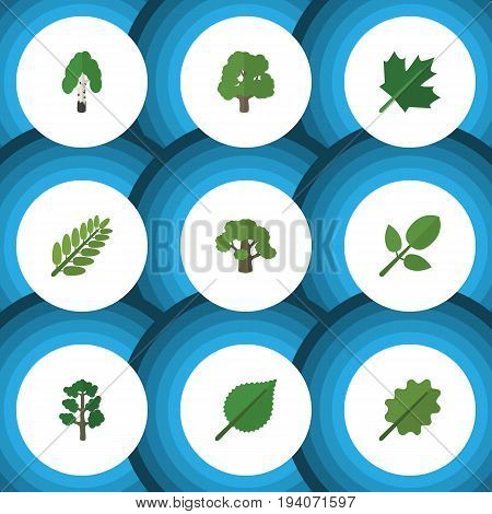 Flat Icon Bio Set Of Linden, Oaken, Leaves And Other Vector Objects. Also Includes Acacia, Hickory, Leaves Elements.