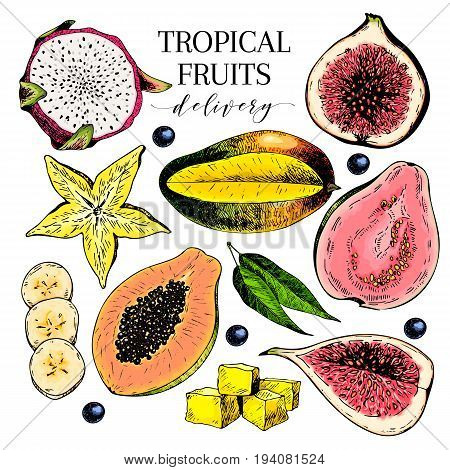Vector hand drawn exotic fruits. Engraved smoothie bowl ingredients. Colored icon set. Tropical sweet food. Carambola fig mango pitaya banana acai guava. Use for exotic restaurant food party