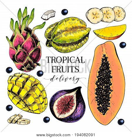 Vector hand drawn exotic fruits. Engraved smoothie bowl ingredients. Colored icon set. Tropical sweet food. Carambola fig mango pitaya banana acai coconut. Use for exotic restaurant food party