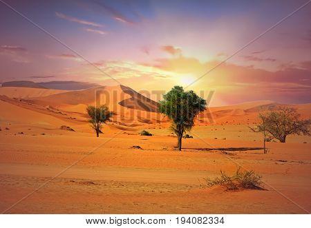 Namib Naukluft Desert with sand dunes and isolated bushes at sunrise - Namibia, Southern Africa