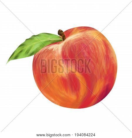 Ripe peach on a white background. Vector illustration.
