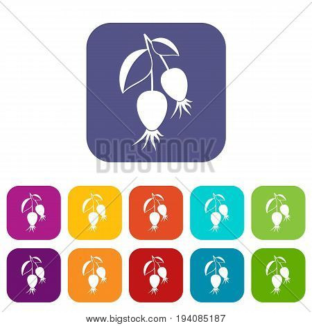 Dogrose berries branch icons set vector illustration in flat style In colors red, blue, green and other