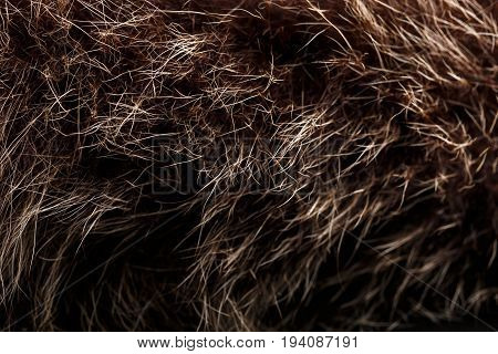 Texture Of Fur. Red Brown Grey Wolf, Fox, Bear Fur Natural, Animal Wildlife Concept And Style For Ba