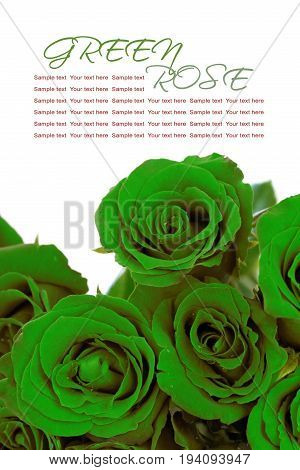Fantasy green roses bouquet with sample text on white background.