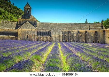 Stunning violet lavender fields with Senanque monastery near Gordes village Luberon Provence region France Europe