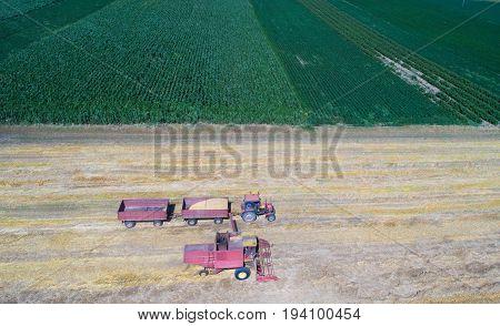 Combine Harvester Working In Golden Wheat Field