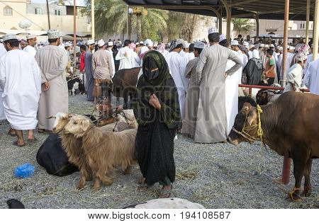 Nizwa Oman June 23rd 2017: omani lady at a Nizwa Habta market walking with her goats