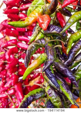 Close up view at hanging cayenne pepper