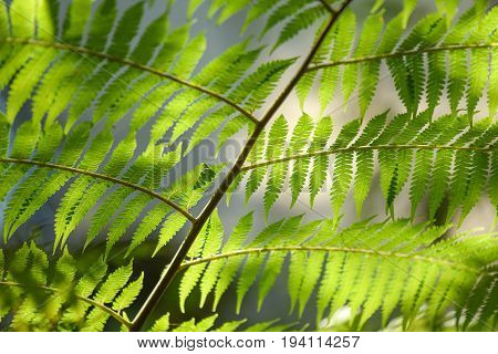 beautiful green leaves on tree branch with morning sunlight lush foliage pattern for nature background in eco friendly concepts