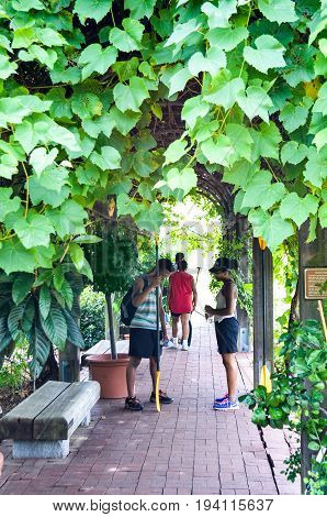 Washington DC USA - August 17 2013: People standing under grapevine passage in garden in National Arboretum