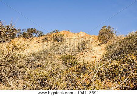 Torrey Pines cliff in pacific ocean in San Diego California