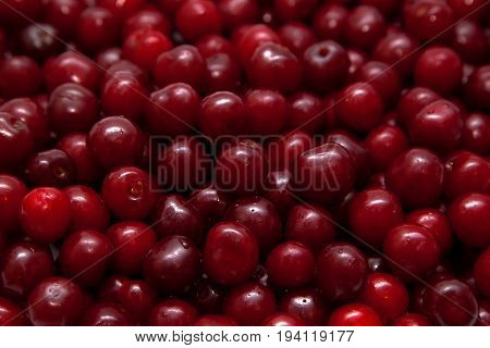 Cherry background. Ripe juicy bright red cherry.