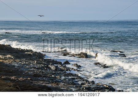 Central California coast with seagull flying over rocky beach in Big Sur