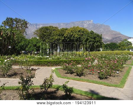 BOTANICAL GARDENS, CAPE TOWN, SOUTH AFRICA