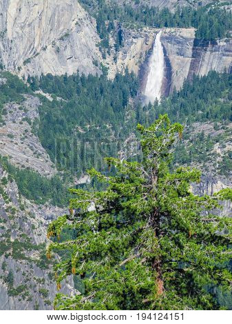 Aerial view of landscape during summer in Yosemite National Park with many pine trees and falls waterfall in mountains