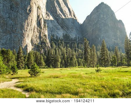 View of landscape during summer in Yosemite National Park with many pine trees and high mountains