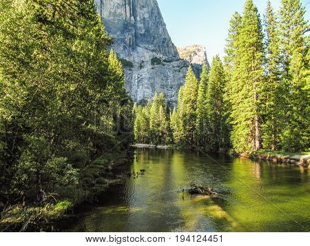 View of landscape during summer in Yosemite National Park with many pine trees and high mountains with river