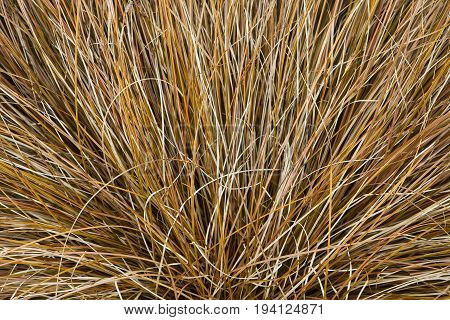 a background image of dry grasses in an artistic arrangement