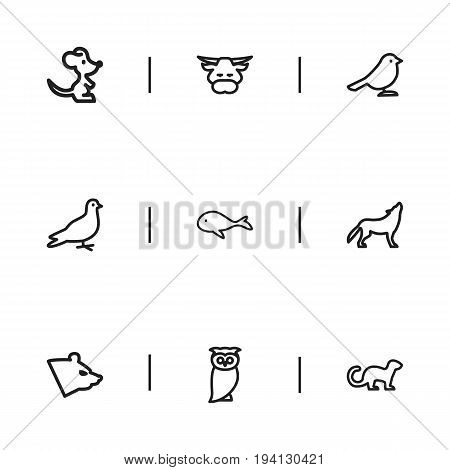 Set Of 9 Editable Zoo Icons. Includes Symbols Such As Polecat, Crow, Mouse And More. Can Be Used For Web, Mobile, UI And Infographic Design.