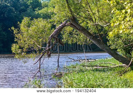 Broken tree hanging above water in lake during summer
