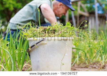A Man Is Weeding Beds. Man In The Garden