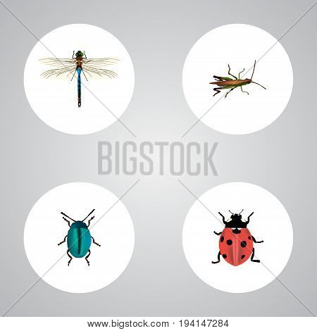 Realistic Locust, Damselfly, Bug And Other Vector Elements. Set Of Insect Realistic Symbols Also Includes Dragonfly, Dor, Bug Objects.