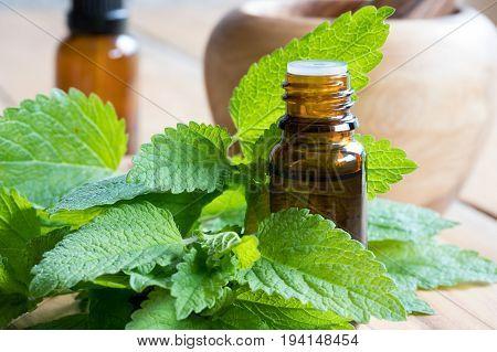 Melissa (lemon balm) essential oil - a bottle with fresh melissa leaves