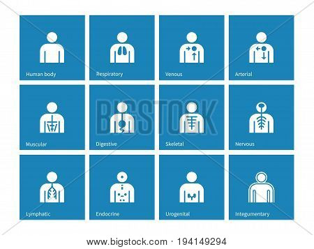 Human Anatomy lymphatic, integumentary, urogenital, endocrine, respiratory, nervous and digestive systems icons on blue background. Vector illustration