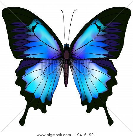 Butterfly vector illustration. Beautiful azure isolated butterfly
