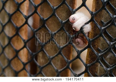 Loris Is Liveing Inthe Cage