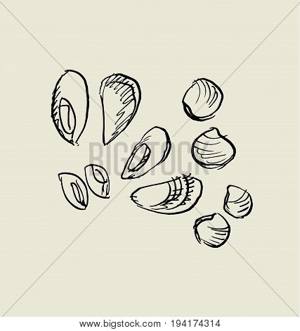 mussel, and shell icon.  food hand drawn sketch vector illustration.