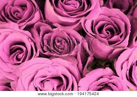 Pink roses bouquet for use as background.
