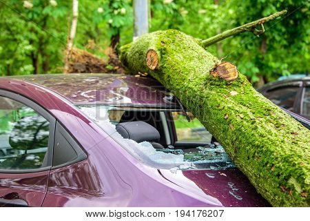 Gigantic fallen toppled tree covered with moss crushed parked purple car, broke the window and antenna as a result of the severe hurricane winds in one of courtyards of Moscow