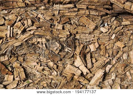 Rotted dry crushed mouldering pine tree trunk wood natural textured background closeup. Old age death and destruction creative concept.