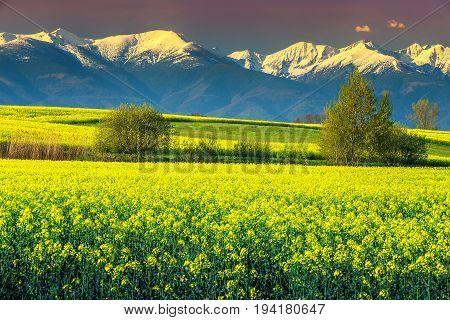 Spectacular snowy mountains with amazing rapeseed field in Transylvania Fagaras mountains Carpathians Romania Europe