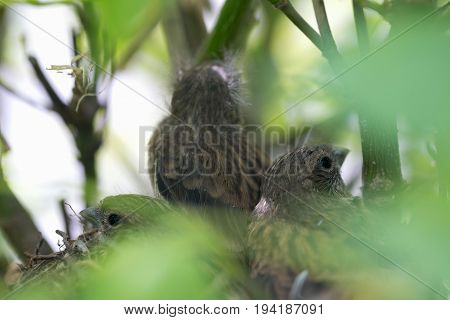 Nest with chicks of a small bird.