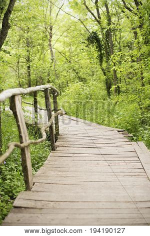 Wooden Bridge In A Forest. Wooden Walkway In Green Forest Near The Ropotamo River, Bulgaria