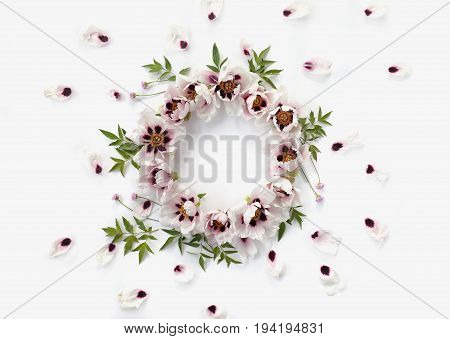 Top view of floral wreath frame made of white peonies big green leaves small pink flowers and falling petals on white background.