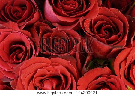 Red roses bouquet for use as background.