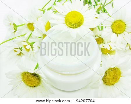cosmetic creme for face with daisy extract health-care