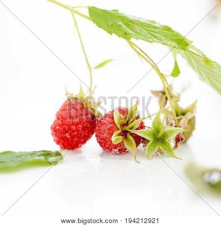 Ripe Organic Raspberries On A White Background